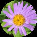 flower5-1