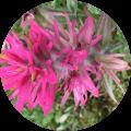 flower6-1